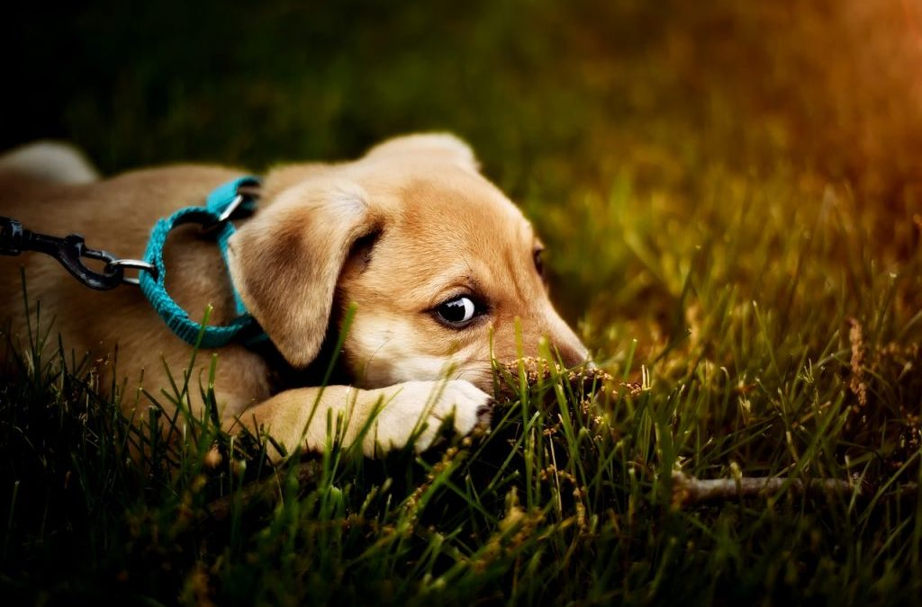 5 Reasons You Should Train Your Puppy or Dog