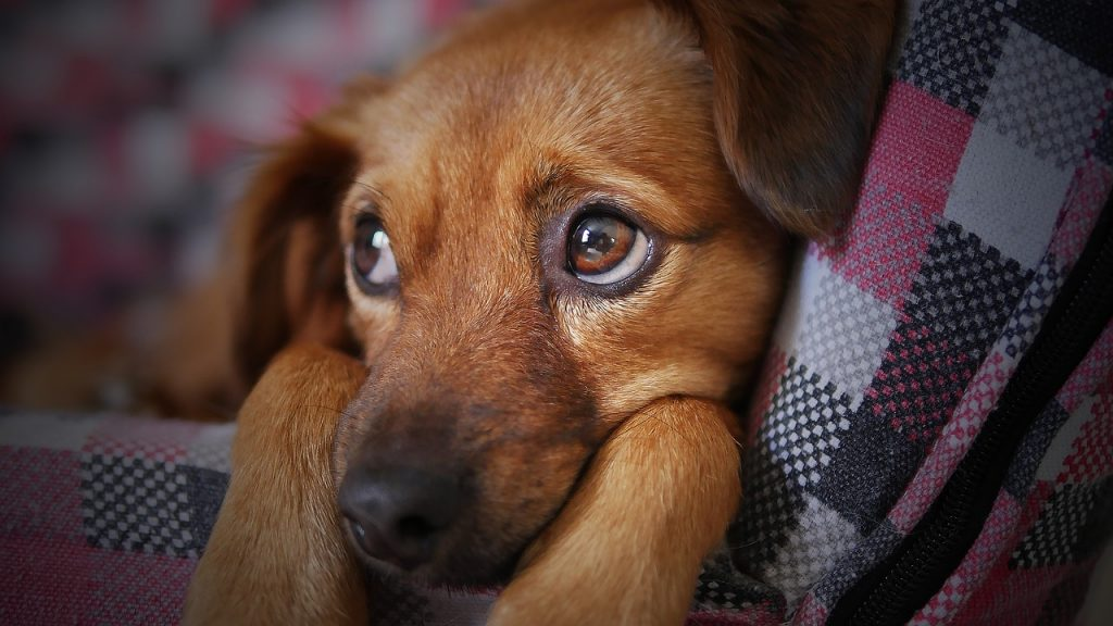 5 Tips to Keep Your Dogs Safe During Fireworks