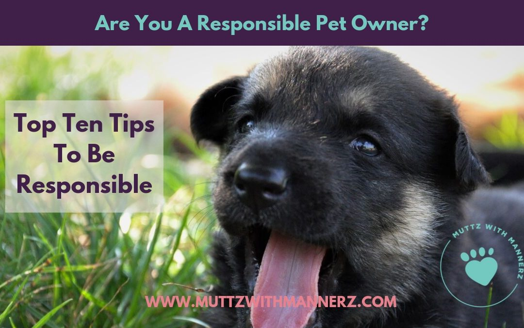 Responsible Dog Ownership Day!