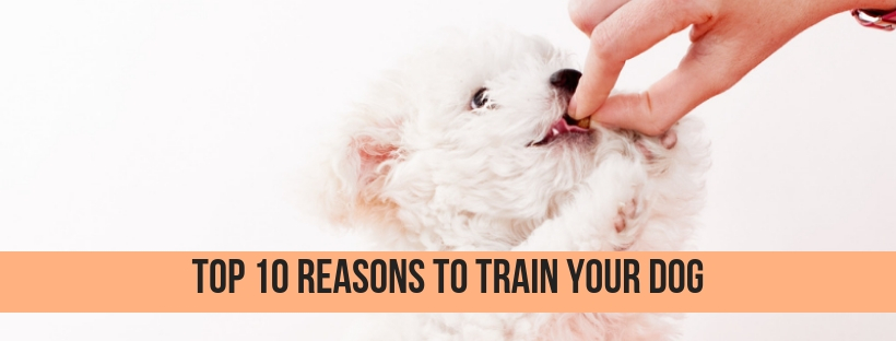 Do You Know the Benefits of Training Your Dog?