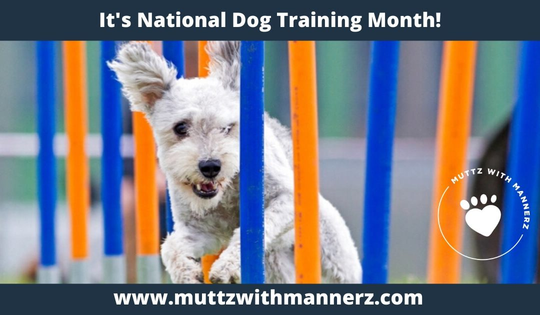 National Dog Training Month