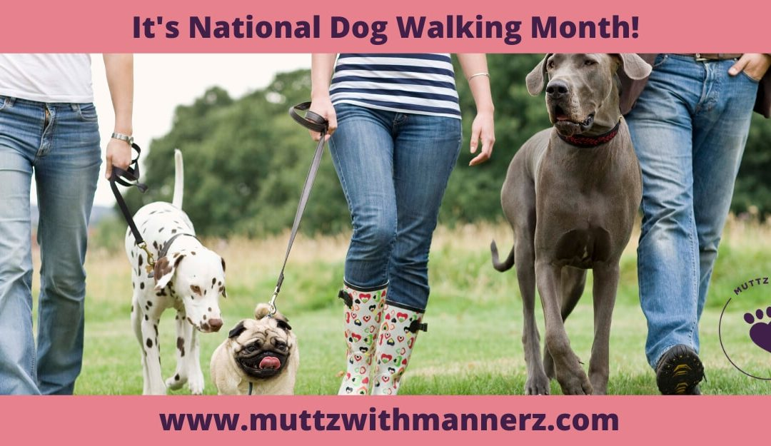 January is National Dog Walking Month
