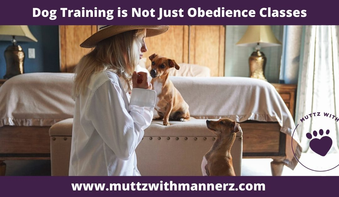 Dog Training is Not Just Obedience Classes