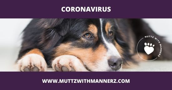 Coronavirus Update from Muttz with Mannerz