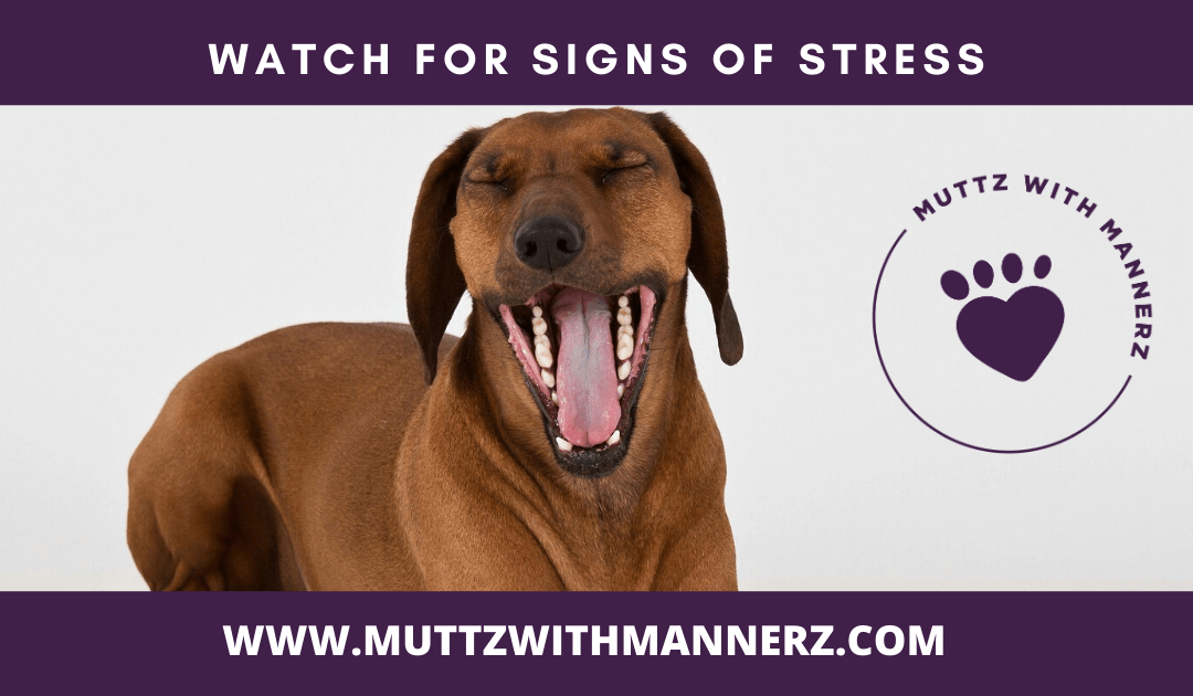 Watching for Signs of Stress