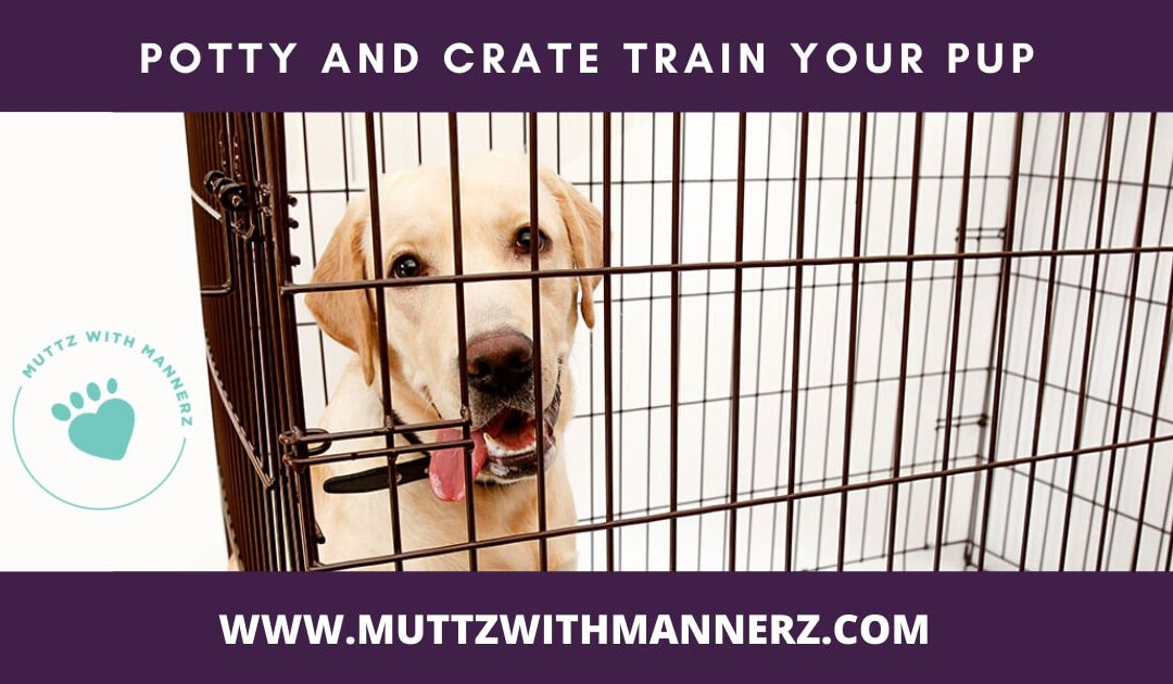 Potty and Crate Training Your Pup