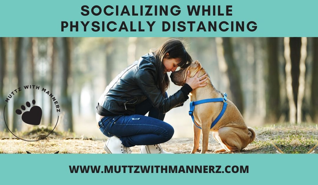 Socializing your dog while physical distancing