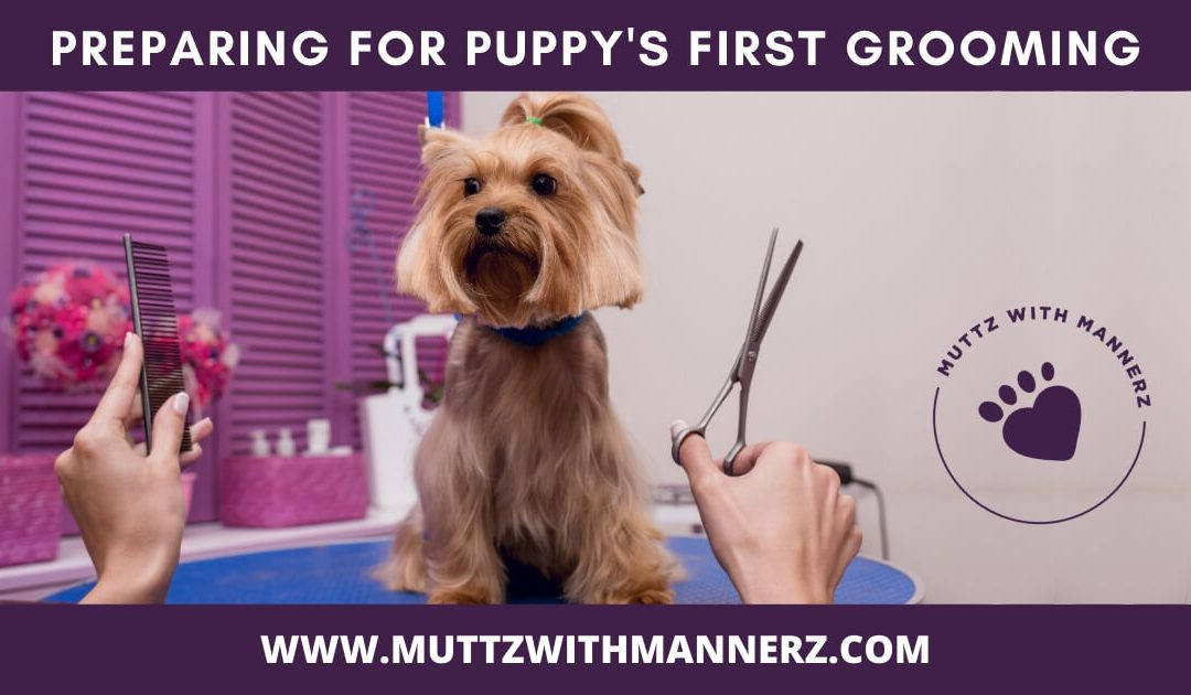 Preparing for Puppy's First Grooming