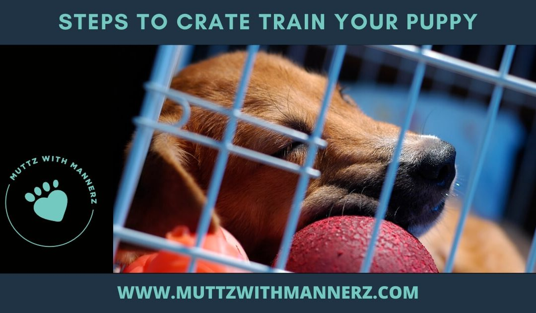 Steps to Crate Train your Puppy