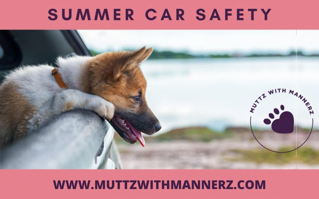 Summer Car Safety for Dogs