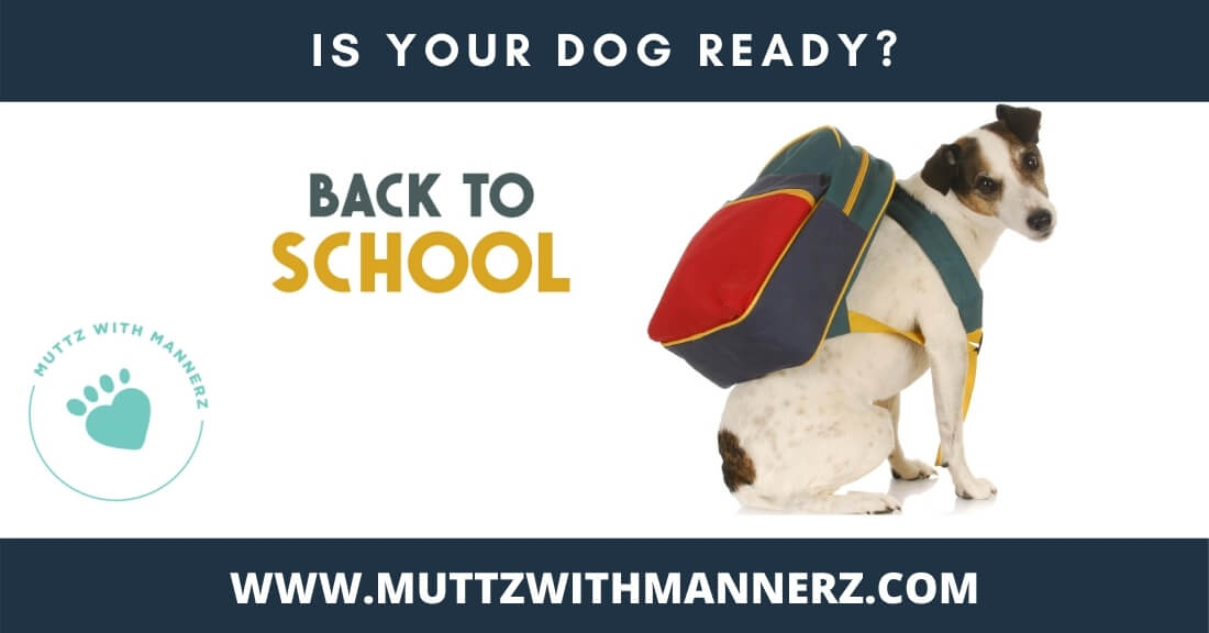 Back to School: Tips to Ease Your Dog's Transition