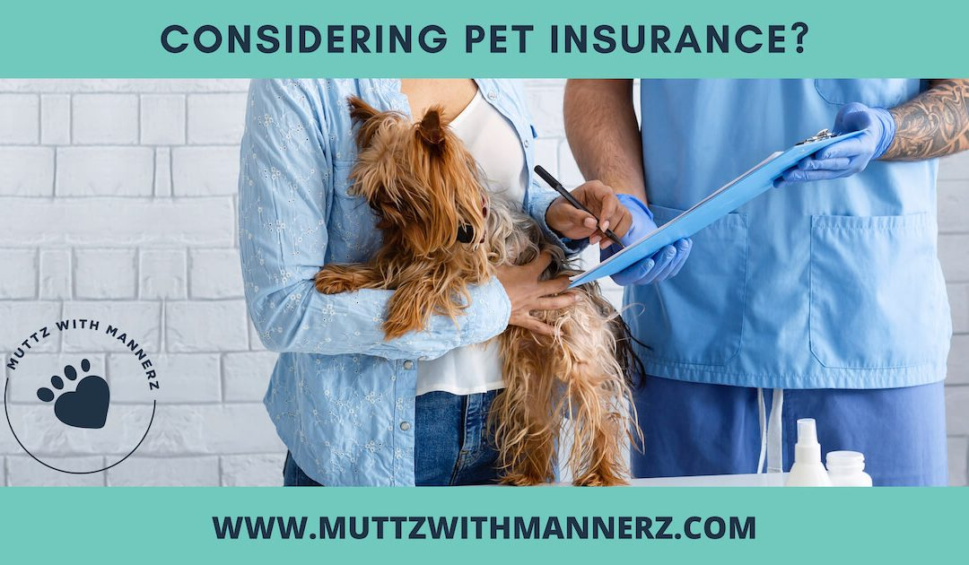 Key Questions To Ask Before You Buy Pet Insurance