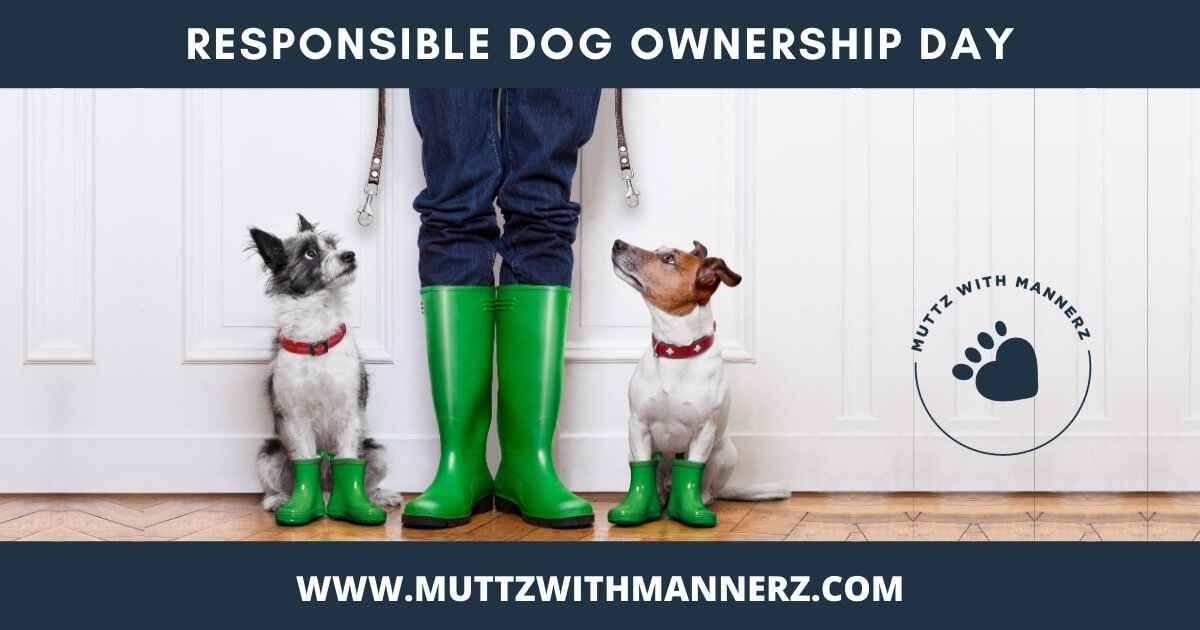 Tips to Follow to Be a Responsible Dog Owner