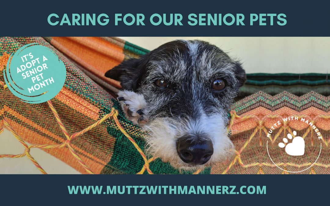 7 Things to be Aware of Caring for a Senior Dog