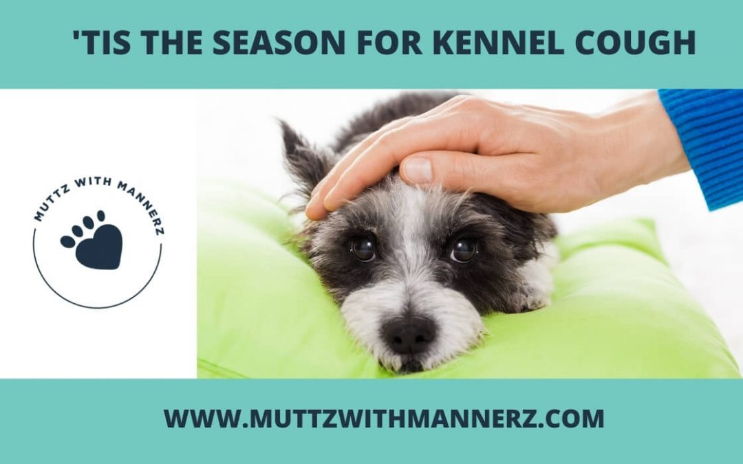 'Tis the Season for Kennel Cough