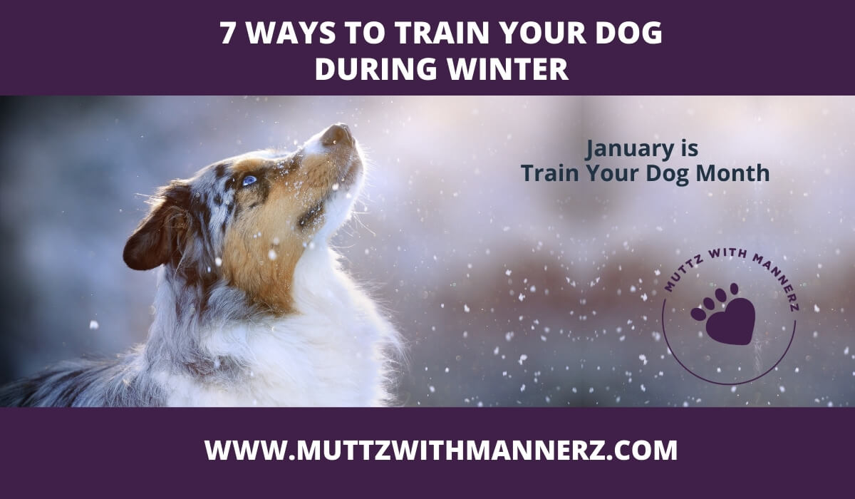 7 Ways to Train Your Dog During Winter