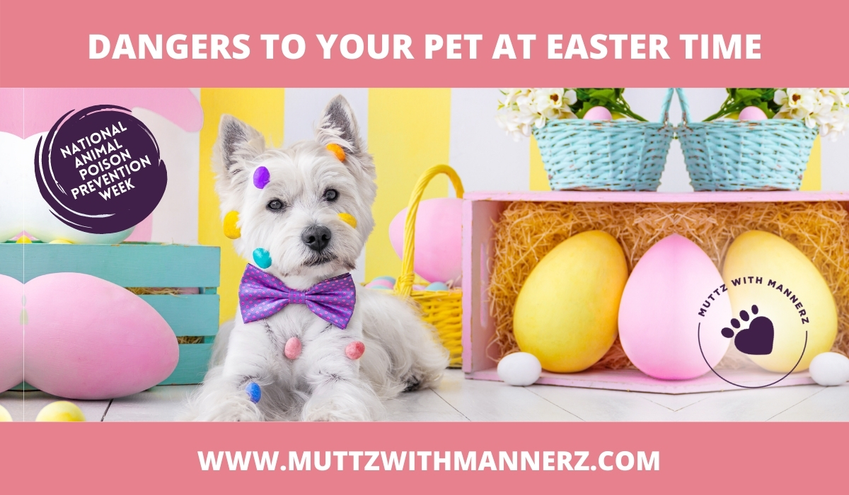 Dangers to your Pet at Easter Time