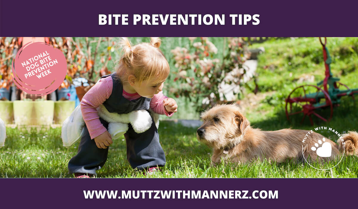 Bite Prevention Tips