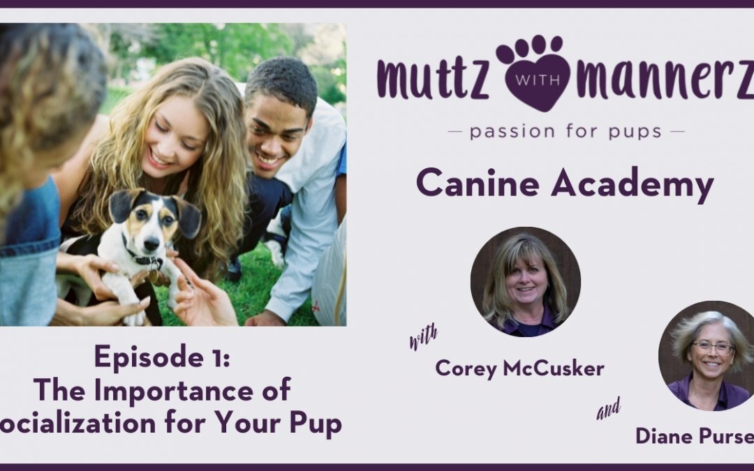 The Importance of Socialization for your Pup