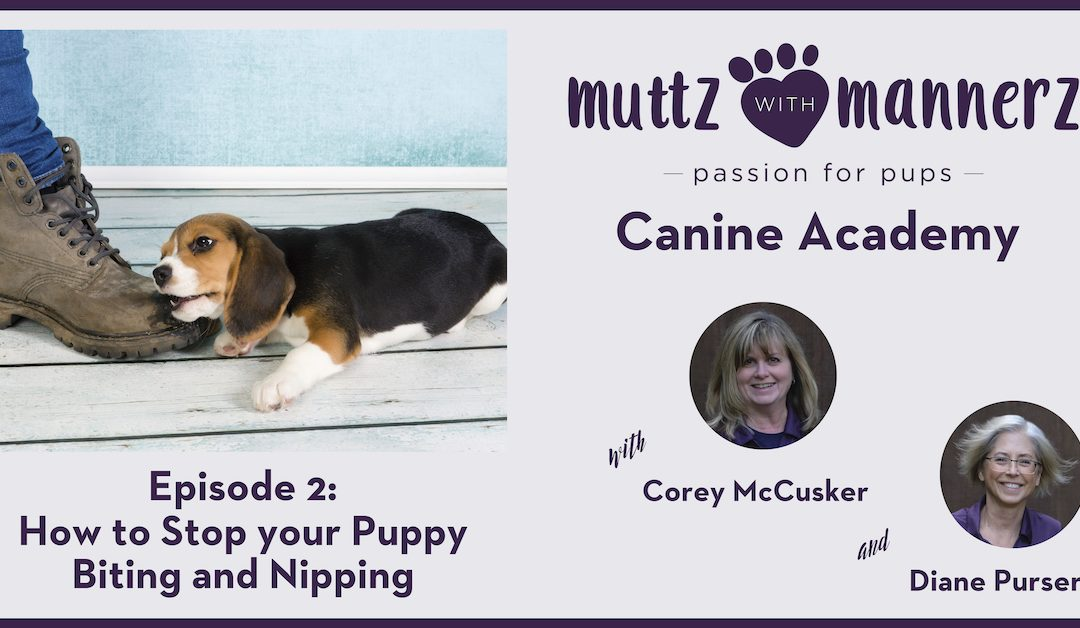 How to Stop your Puppy Biting and Nipping Image