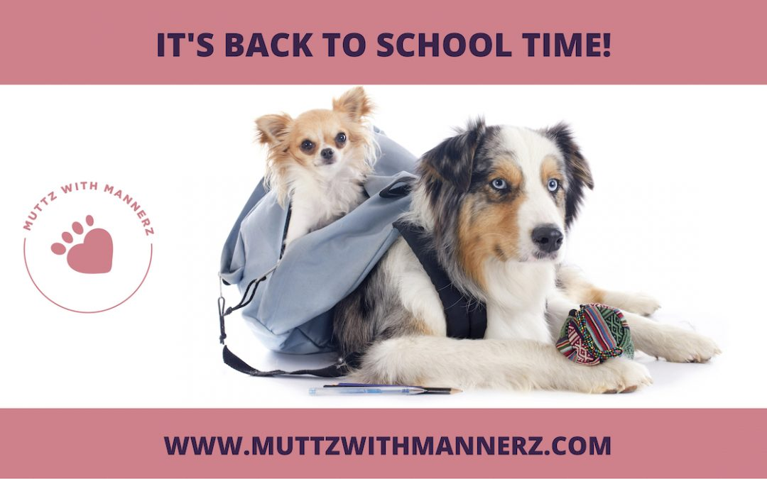 Back to School: How to make the transition less stressful… for everyone!