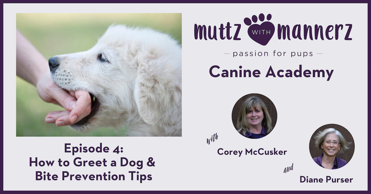 Episode 004: How to Greet a Dog & Bite Prevention Tips