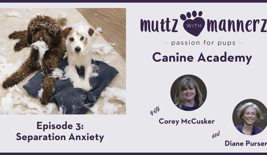 Muttz with Mannerz Canine Academy Podcast - Separation Anxiety