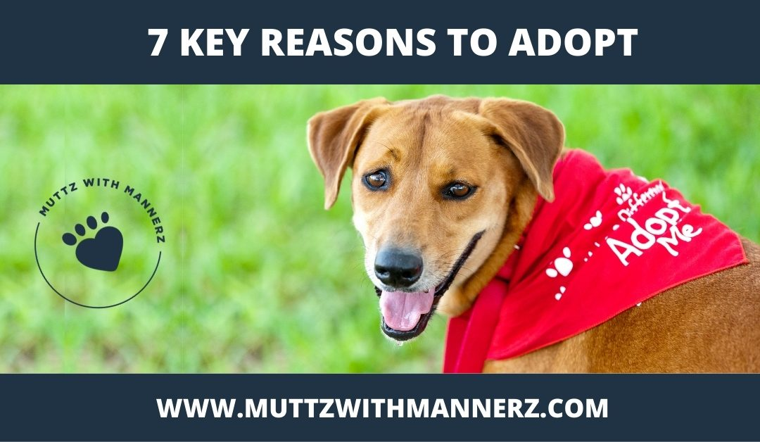 7 Key Reasons to Adopt from a Shelter or Rescue